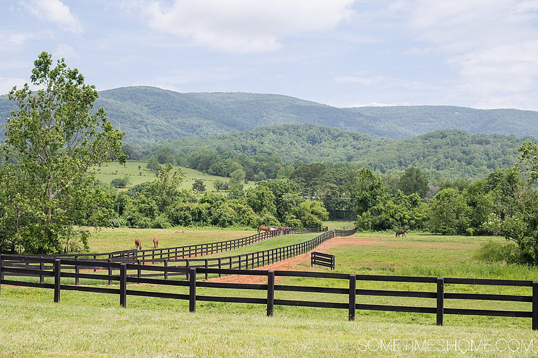 Blue Ridge Mountains with horses in the distance at a vineyard in Charlottesvillle, VA.